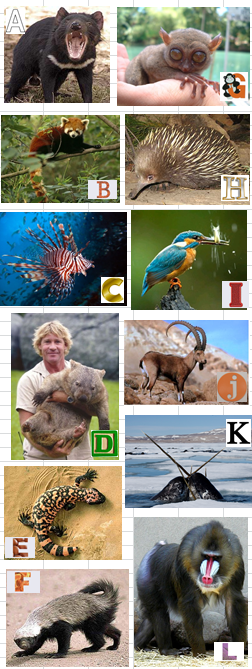 Trivia Picture Round – Name that Animal Quiz! – Say Know to Trivia
