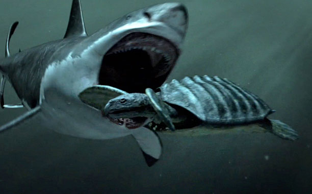 """Team """"Megadent"""" was sorely disapointed in the answer to question #5 (Image Credit: Discovery Channel"""